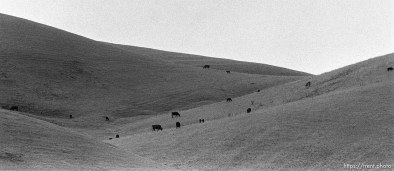 Cows and hills (where I used to hike)