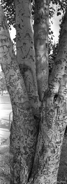 Carved up tree at Pine Valley Intermediate School