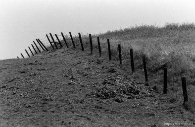 Fence and hill and bird