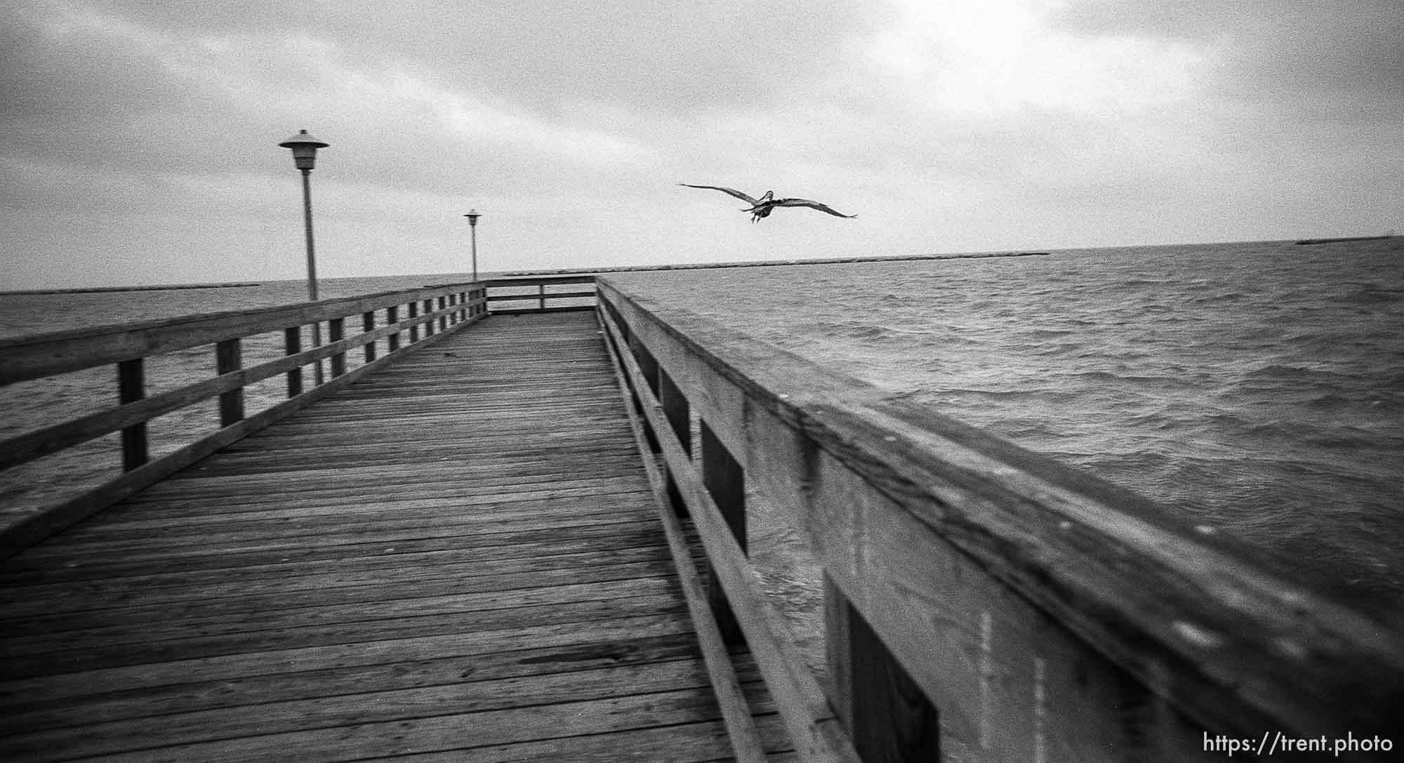 Bird and fishing pier.