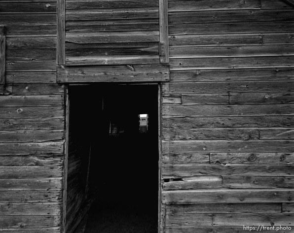 Horse through barn at Aunt Bea's farm.