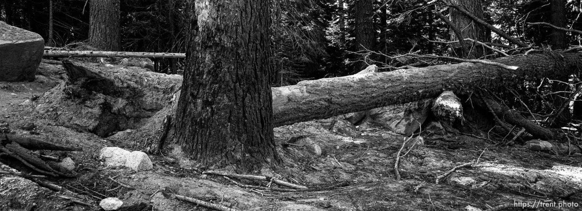 avalanche damage on trail to Sword Lake