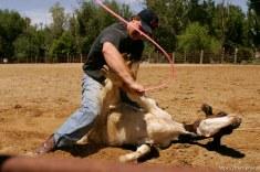 Clint Robinson, calf-roper