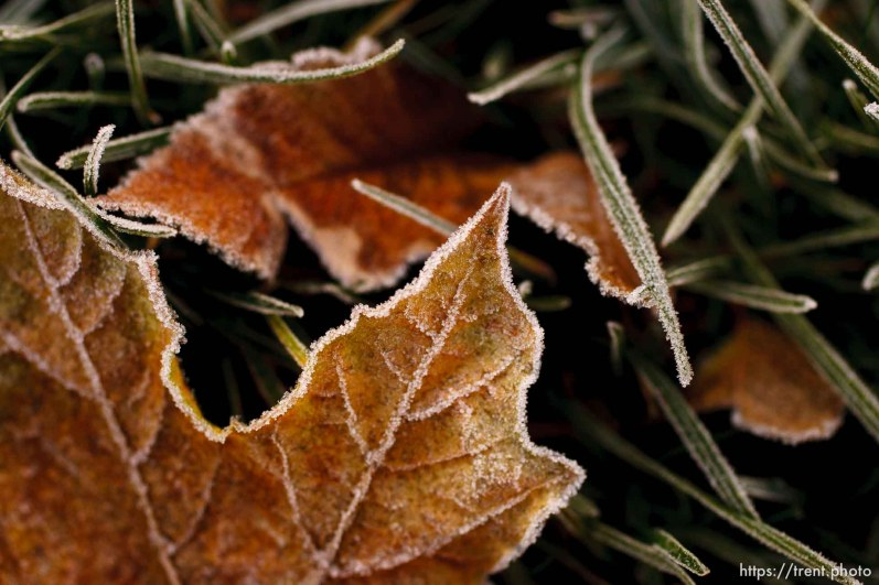 Leaves, grass, frost. 11.18.2004