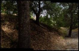 walking path and trees in San Ramon
