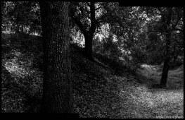 Walking path, trees, in San Ramon