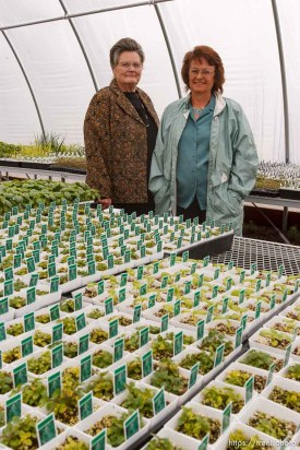 Katie Cox runs Southwest Nursery, an herb company that supplies approximately half of the herbs purchased in Utah. She was photographed in a greenhouse filled with growing plants, including the basil in the foreground. Virginia Markham runs Utah Native Wildflowers.