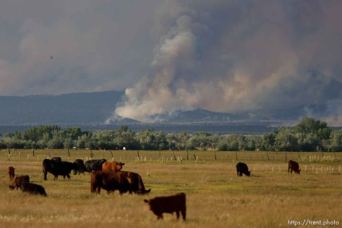 Neola - An out-of-control wildfire in the Ashley National Forest near Roosevelt had burned 14,000 acres in the Unitah Basin by Saturday morning and claimed the lives of three people. ; 6.30.2007