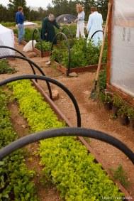 Westcliffe - . Monday, July 28, 2008. garden. brooke adams