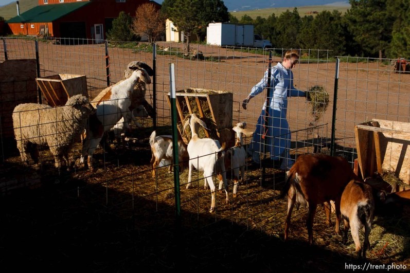 Westcliffe - . Wednesday, July 30, 2008. girls and goats