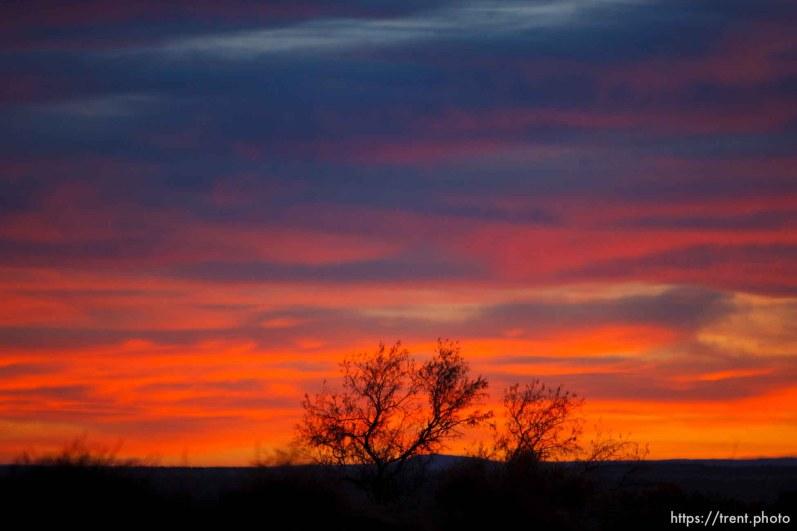 sunset, tree Thursday November 29, 2012.