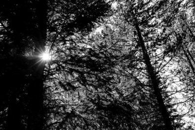 sunlight through trees, Saturday July 22, 2017.