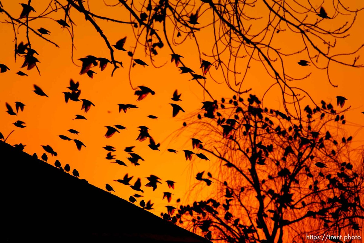 Birds at sunset