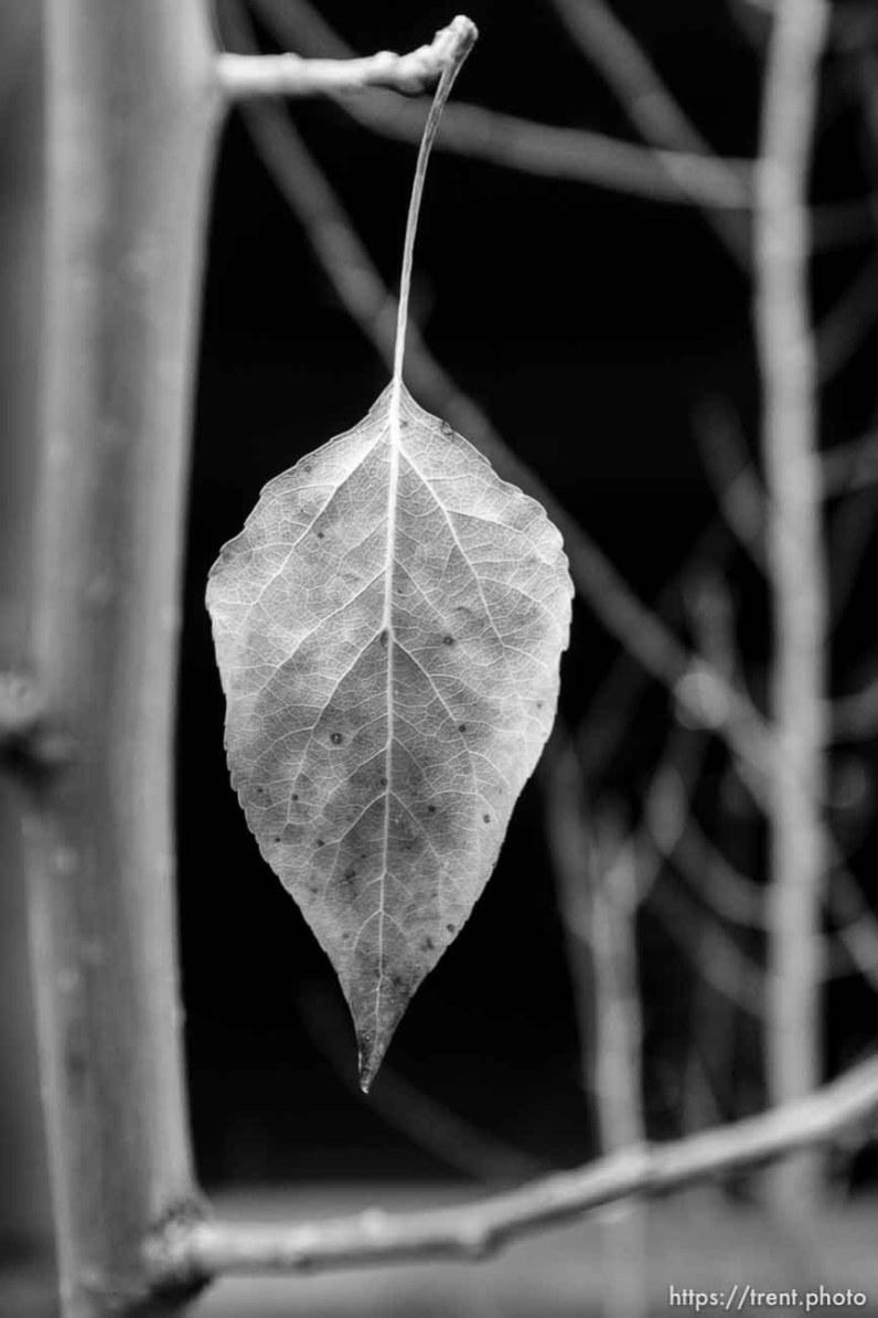 leaf, Tuesday January 9, 2018.
