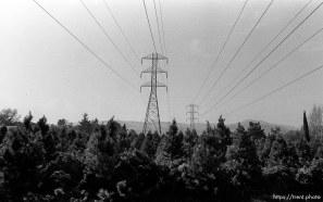 Power lines and christmas tree farm. San Ramon project