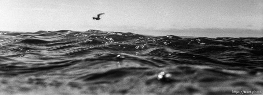 Bird over the water in the ocean