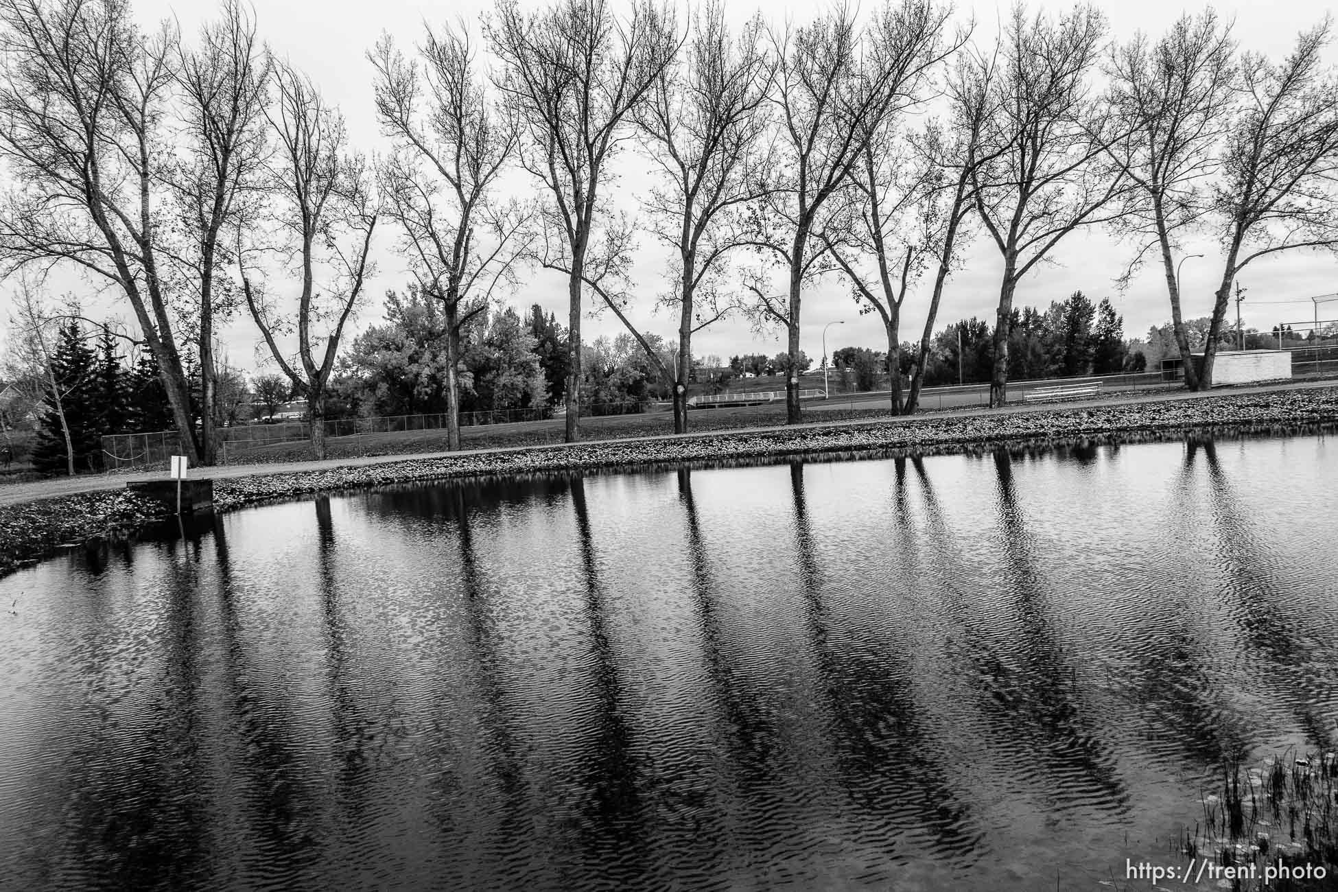 trees at fish pond, magrath, Thursday October 6, 2016.