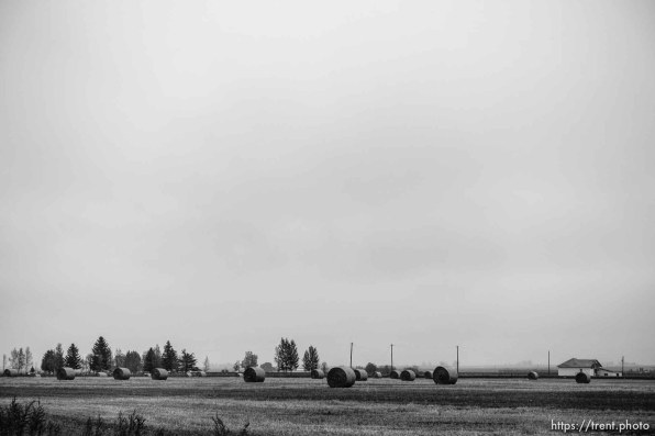 hay, magrath, Sunday October 9, 2016.