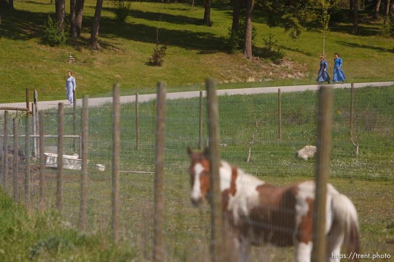 Polygamist Winston Blackmore in Bountiful, British Columbia. horses, flds kids.