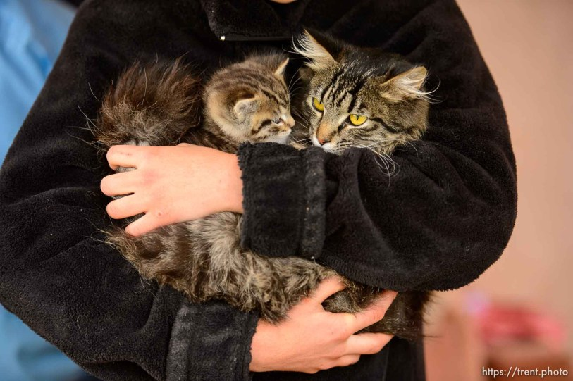 Trent Nelson   The Salt Lake Tribune UEP eviction of property at 555 N Lauritzen Ave, Colorado City, AZ, Wednesday May 10, 2017. Mary Anne and kitten.