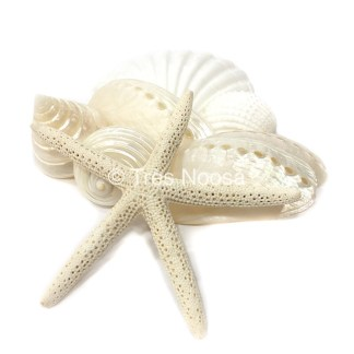 Shells and Starfish for beach wedding