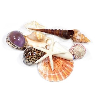 Pacific seashells