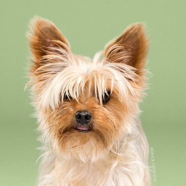 funny-dog-grooming13a