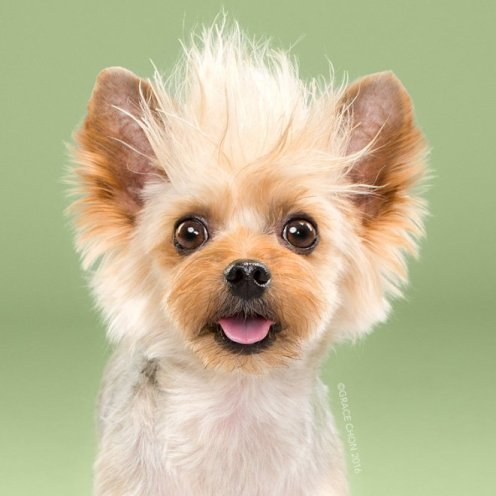 funny-dog-grooming14a