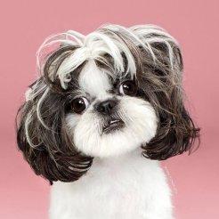 funny-dog-grooming18