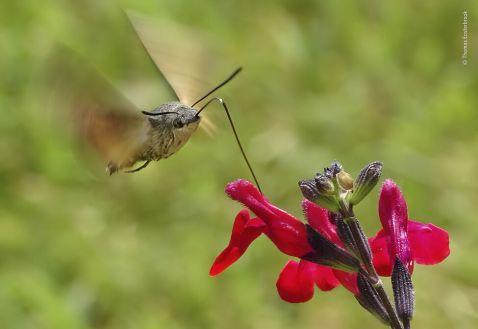 Ganadora-Young-Wildlife-Photographer-Year_EDIIMA20191017_0238_19