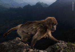 Ganadora-Young-Wildlife-Photographer-Year_EDIIMA20191017_0248_19