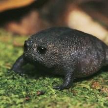 rain-frogs12