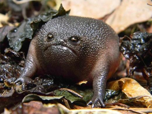 rain-frogs6