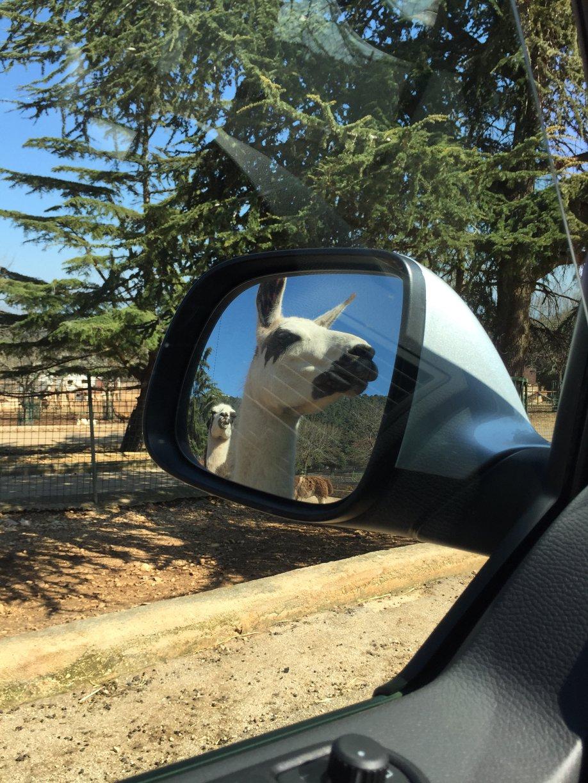 zoo di Fasano, puglia, viaggio on the road con bambini iniziali, trevaligie