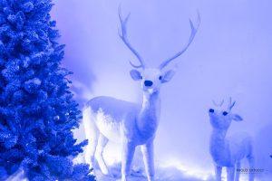 Casa Di Babbo Natale Al Polo Nord.Babbo Natale Nel Villaggio Incantato Di Gaeta Www