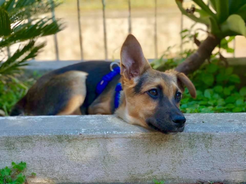 Viaggiare con il cane, organizzare un viaggio con il cane, trevaligie