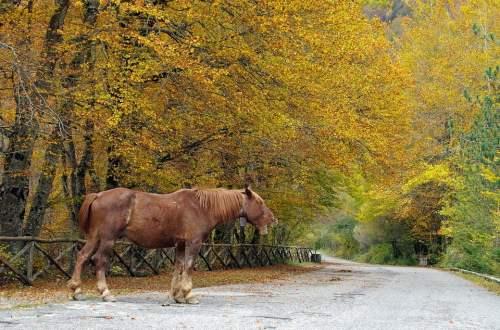 Parco nazionale d'Abruzzo, viaggio con i bambini, camosciara, trevaligie
