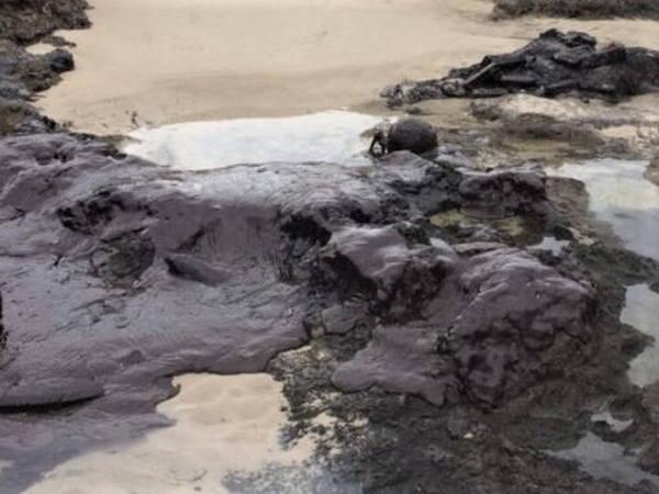 漂着する原油 宝島