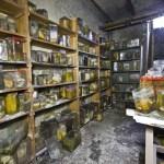 Horror Labs - Belgium