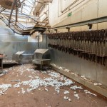 Slaughterhouse De Lokery - Belgium