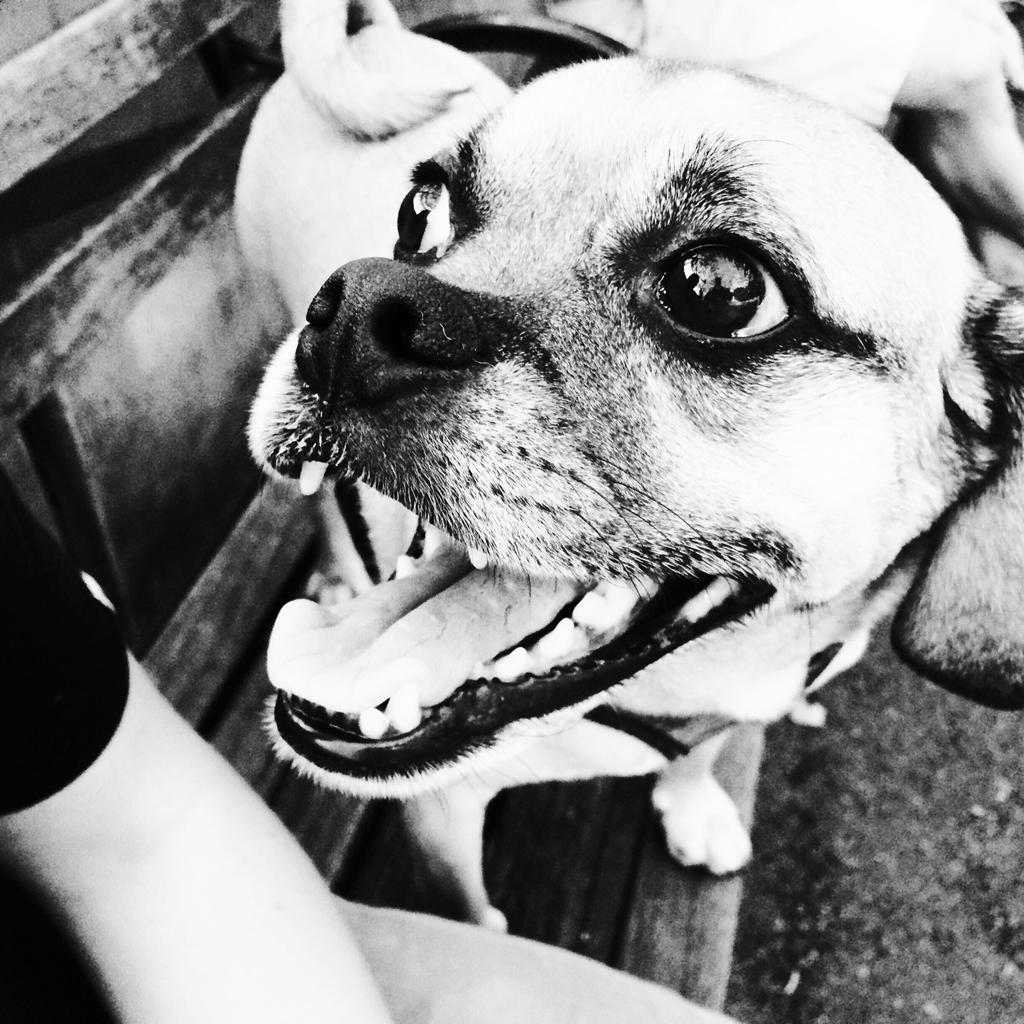 Dog Run Smile
