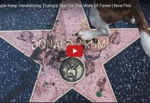 Donald Trump's 'Walk Of Fame' Star May Be Removed Because People Keep Urinating On It.