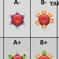 Вече е ясно коя кръвна група е най-податлива към болести и коя е най-устойчива