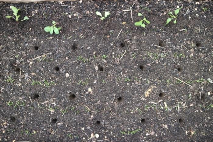 Sadilne lunkje za presajanje sadik narejene s sadilnim klinom na dolgem držalu