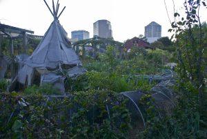 The garden at the Edible Schoolyard