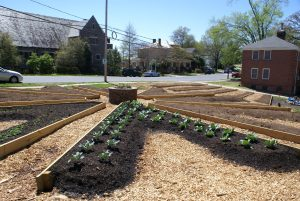 A community garden by Holy Trinity Church in downtown Greensboro.