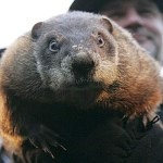 The Weekender: The Groundhog Edition