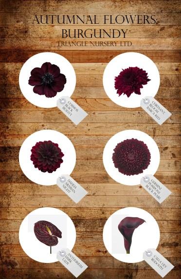 autumnal-flowers-burgundy