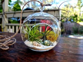 hanging-air-plant-terrarium-kit-ii