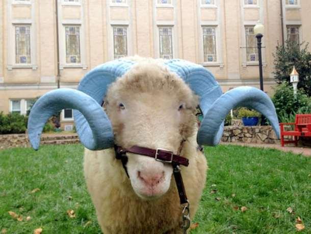 Rameses UNC Tar Heels mascot
